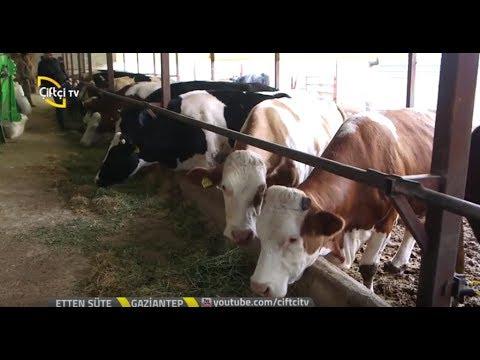 Etten Süte Büyükbaş Hayvan çiftligi Kurulum Maliyeti Youtube