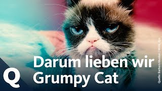 Das Phänomen der Grumpy Cat | Quarks