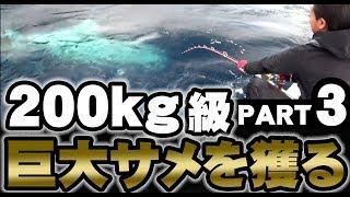 巨大サメを獲る【PART3】【English Subtitles】【200kgクラス】