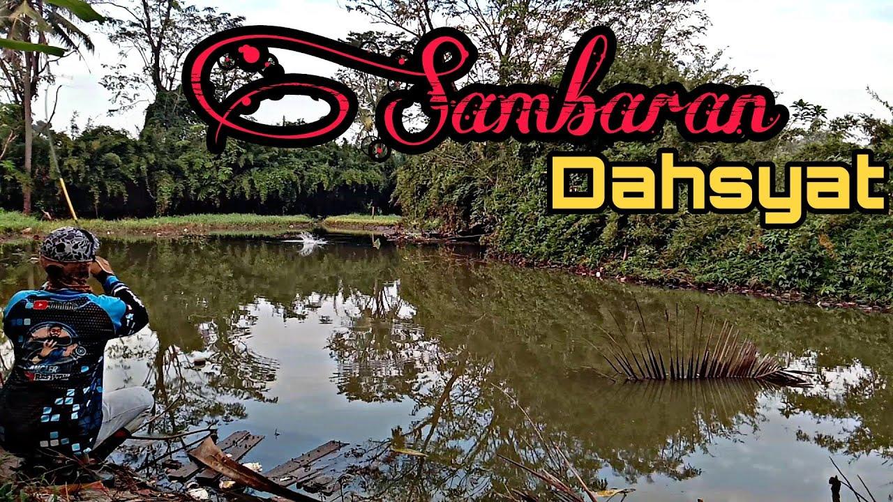 Casting ikan Gabus di Spot Bekas Empang/Galatama - YouTube