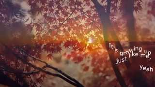 Pearl Jam - In My Tree (lyrics)
