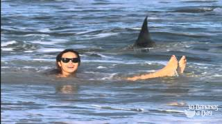 German Backpacker Shark Attack Off Australian Sydney Beach : real or fake?