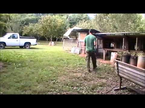 Raising Chickens Small Scale Farming