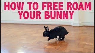 HOW TO FREE ROAM YOUR RABBIT INDOORS! (NO CAGE)