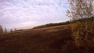 Охота на куропатку с Русским охотничьим спаниелем