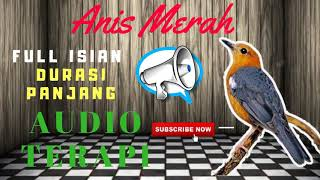masteran-anis-merah-full-isian-mp3-suara-burung-anis-merah-untuk-masteran-mp3