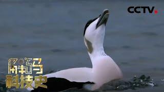 《解码科技史》 20201220 羽绒之暖  CCTV科教 - YouTube