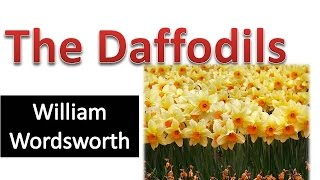 The Daffodils by william wordsworth (hindi explanation)