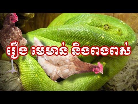 Khmer Legend- រឿង មេមាន់ និងពងពស់
