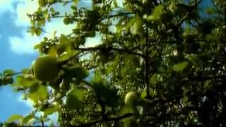 Czarnobyl - życie w strefie śmierci odcinek 1 z 4