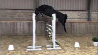 L 2016 Douglas X Poor Boy Loose Jumping