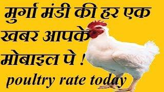 boirler poultry rate today | 08-11-2018 | तैयार मुर्गिओं का आज का रेट |