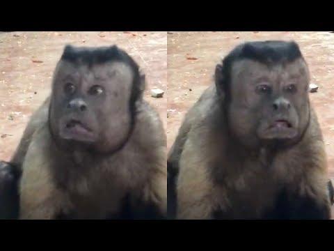 Mirá el mono y el perro con caras humanas que conmueven las redes sociales