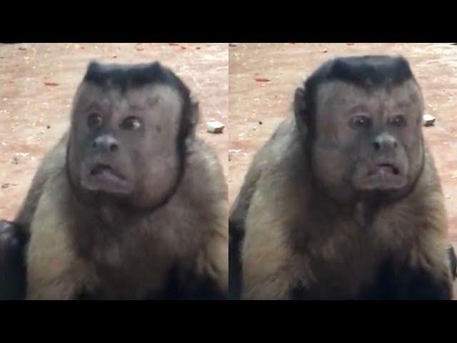 Un mono con cara 'humana' y aspecto depresivo es la atracción de un zoológico
