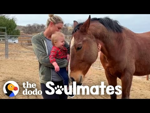 A Horse named Magic Inspires At-Risk Girls | The Dodo Soulmates