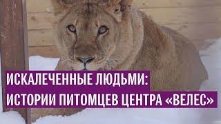 """Истории питомцев центра """"Велес"""""""