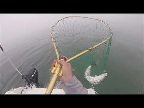Salmon Fishing SF Bay Area