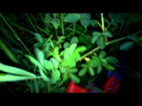 Культивирование грибов - Справочник химика 21