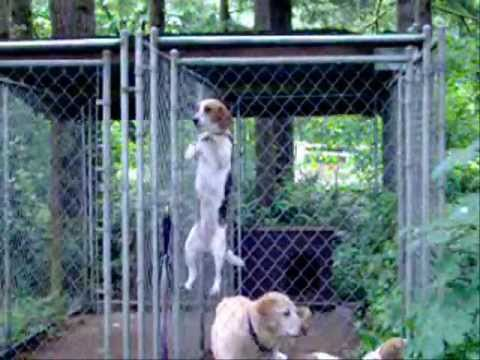 Belle the Beagle's AMAZING Jail Break Escape!