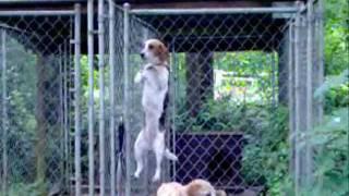 Belle The Beagle's Amazing Jail Break Escape!