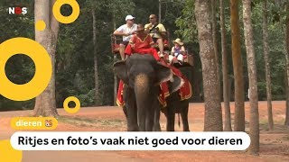 'Doe helemaal niets met wilde dieren op vakantie'