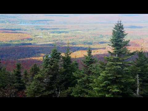 Pine Trees Forest Landscape