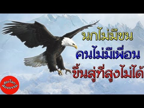 นกไม่มีขน  คนไม่มีเพื่อน  ขึ้นสู่ที่สูงไม่ได้  สร้างแรงบันดาลใจ