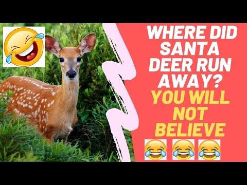 Funny and Cute Animal Videos: Not a Prank - Deers Walk between Houses Acting Like Superhero or PUBG