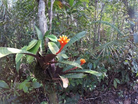 Botany Field Trip | Colombia 2016
