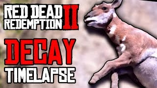Let's Watch The Decay (Timelapse) - RED DEAD REDEMPTION 2 Gameplay Video