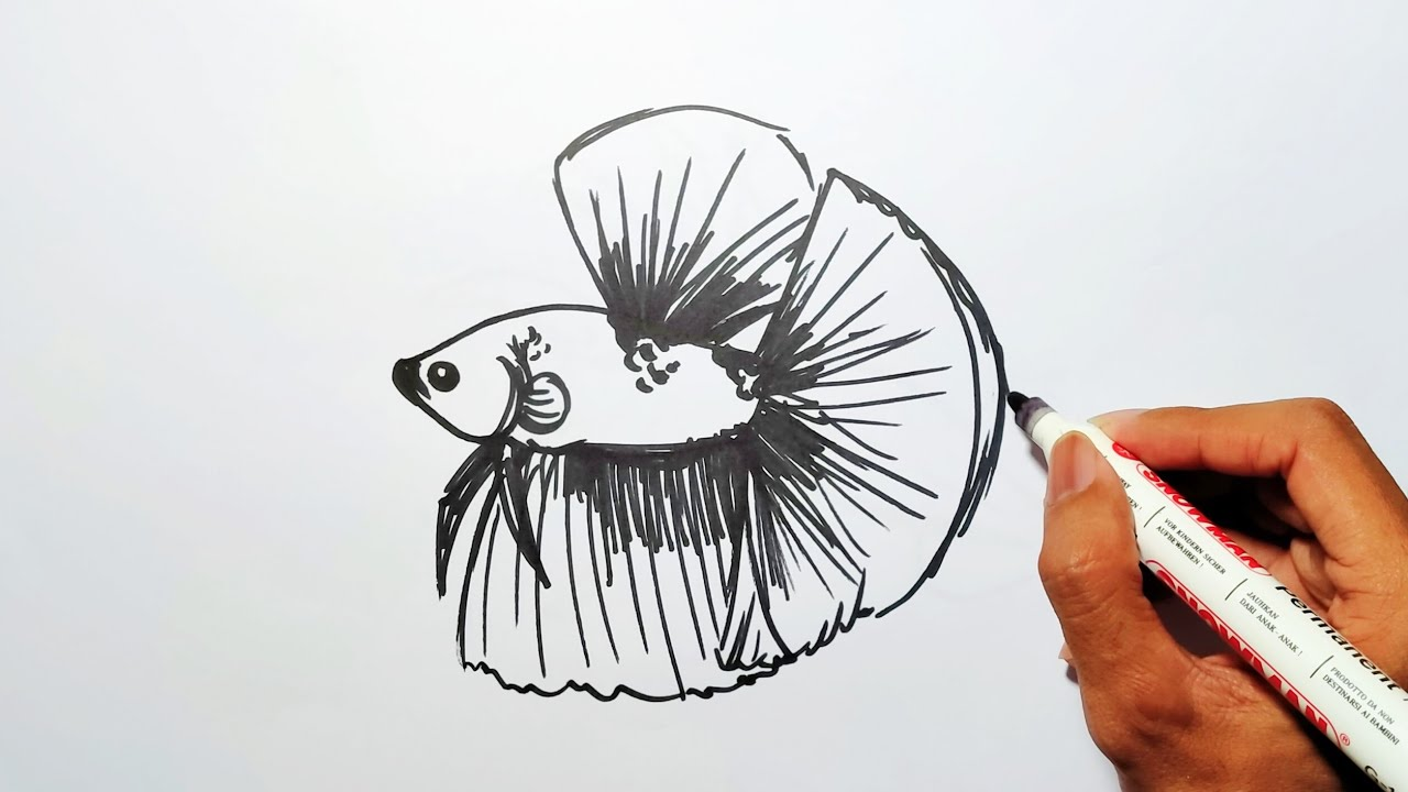 Cara Menggambar Ikan Cupang Half Moon Youtube