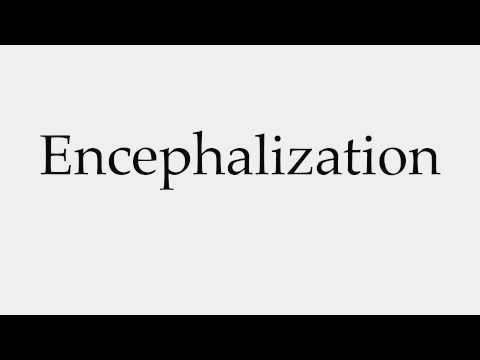 How to Pronounce Encephalization