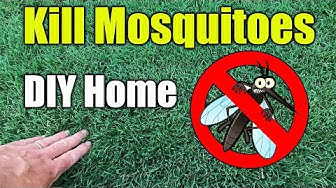 Mosquito Control Home and Yard Spraying