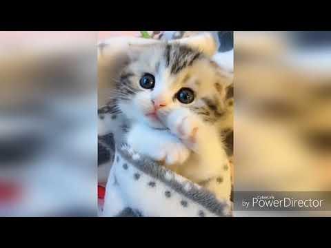 Приколы кошек мир животных открыт😅#смешнодослёз #Кот #Cat #kitty /Julia няша Pets /😍✌️😘