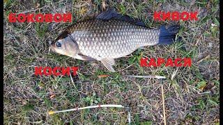 ЛОВЛЯ КАРАСЯ на БОКОВОЙ КИВОК Тест боковых кивков рыбалка на карася в камышах весной
