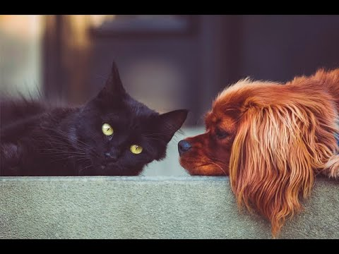 Mascotas y viajes: consejos para que el paseo sea todo un éxito | Noticias Caracol