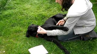 Bess Is Sent Down From Puppy Training School... 10 Sept 2011