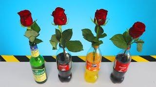 In welcher Flüssigkeit bleiben Rosen länger Frisch? Experiment