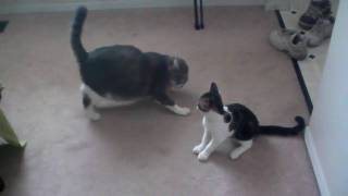 Monster Cat takes a beating. Ninja Cat is smaller and faster and be...