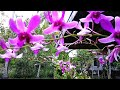 Purple orchid in a living tree