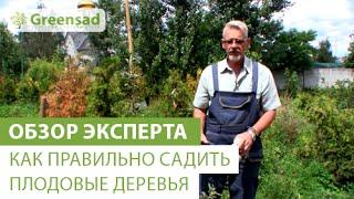 видео Саженцы деревьев