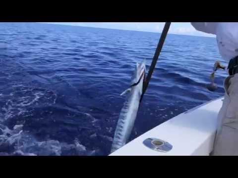 Bermuda Offshore Fishing  - Wahoo Catch