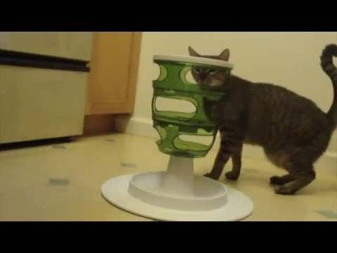CATS' FOOD PUZZLE: Can they figure it out?