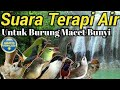 Terapi Air Untuk Burung Macet  Mp3 - Mp4 Download
