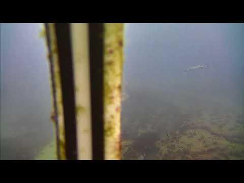 Sharks in the Atlantic Cam 05-23-2017 05:00:10 - 05:59:58