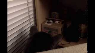 Cat reacts to Japanese Itazura Coin Bank