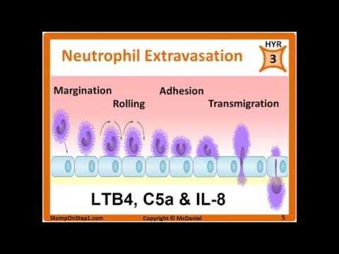 Histamine, Prostaglandin, Leukotrienes, Bradkinin, PGE2 LTB4 Chemotactic Factors