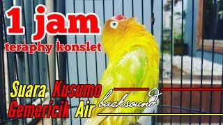 Download Lagu Suara Kusumo Backsound Gemericik Air Teraphy Konslet MP3