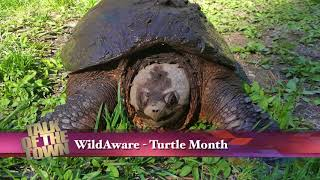 WildAware Update Turtle Crosssing