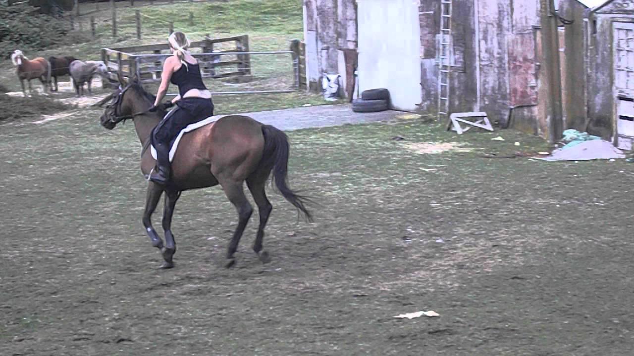 Hard Horse Riding Youku